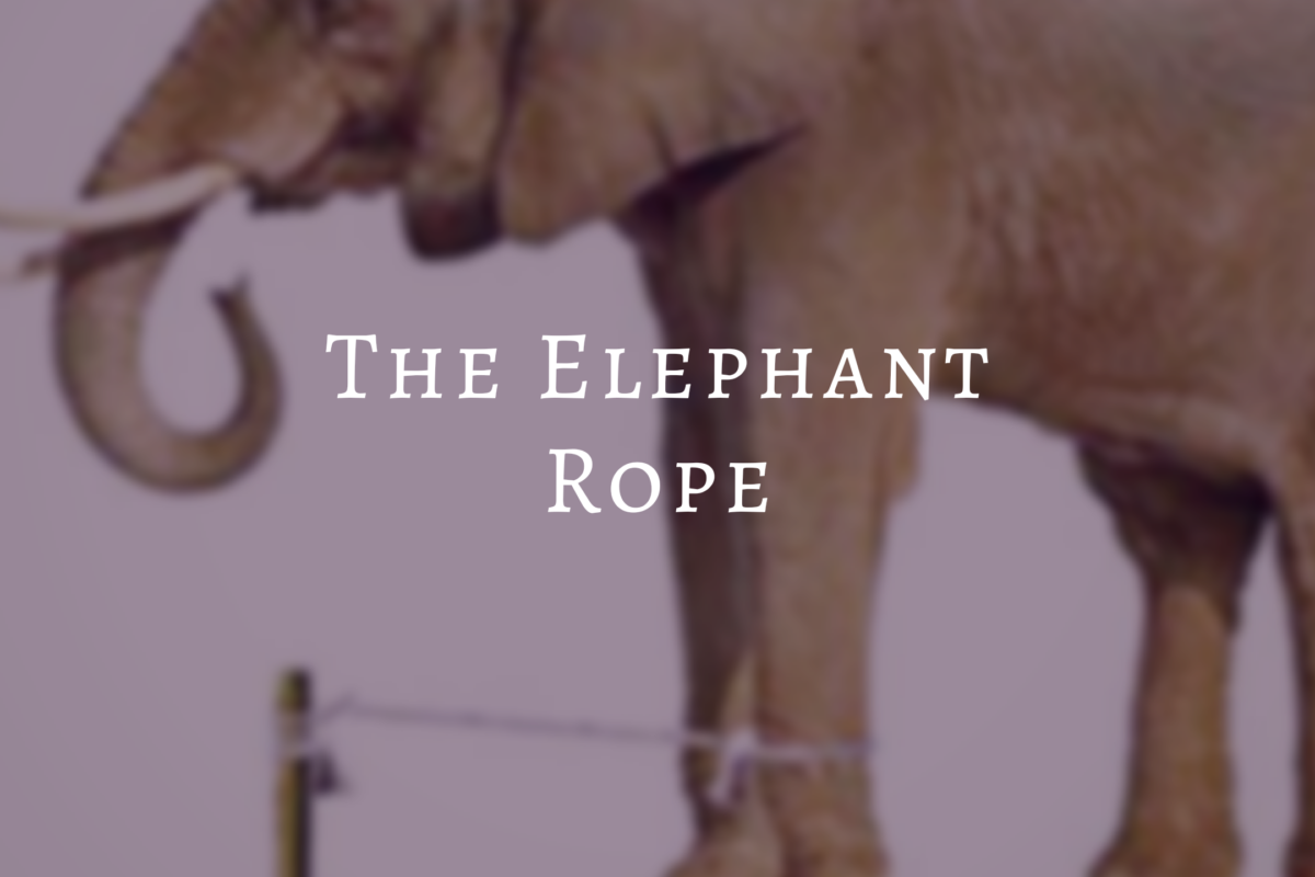 Amazing Story: Elephant Rope